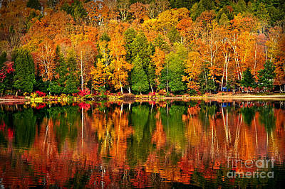 Vivid Fall Colors Photograph - Fall Forest Reflections by Elena Elisseeva