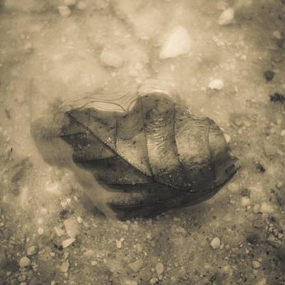 Photograph - Fine Art by Gianfranco Evangelista