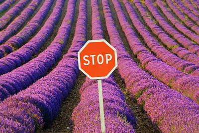 Stop Sign Photograph - France, Provence by Jaynes Gallery