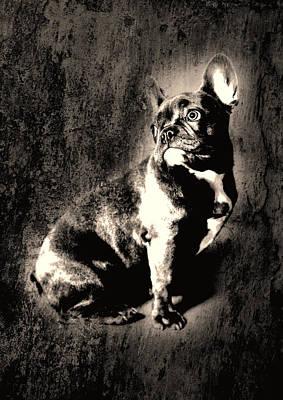French Bulldog Print by Falko Follert