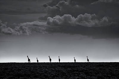 6 Giraffes Art Print