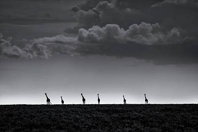 Neck Photograph - 6 Giraffes by Greg Metro