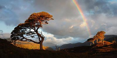 Photograph - Glen Strathfarrar by Gavin Macrae