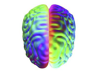 Bright Colours Photograph - Human Brain by Alfred Pasieka