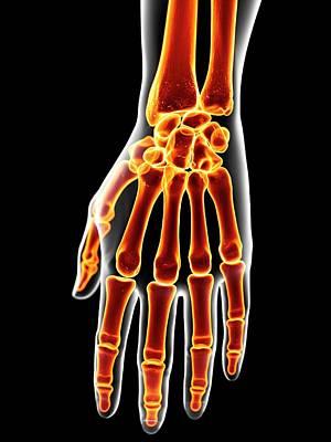 Human Hand Bones Art Print by Sciepro