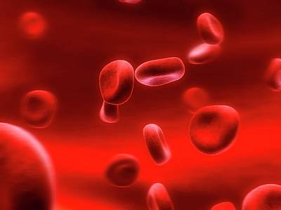 Human Red Blood Cells Art Print by Sebastian Kaulitzki