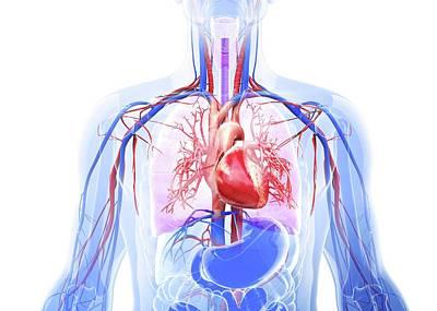 Human Respiratory System Art Print