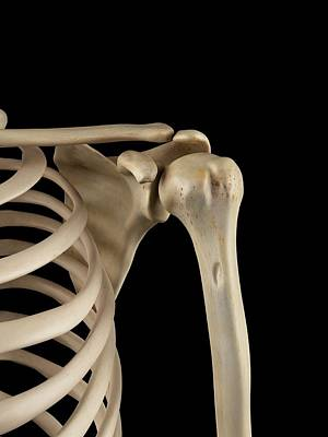 Human Shoulder Bones Art Print by Sciepro