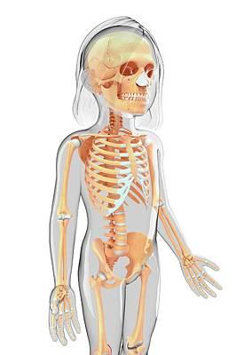 Biomedical Illustration Photograph - Human Skeletal System by Pixologicstudio