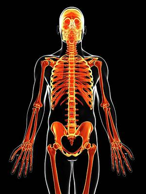 Biomedical Illustration Photograph - Human Skeleton by Sebastian Kaulitzki