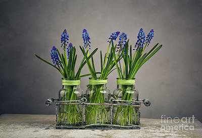 Vase Table Photograph - Hyacinth Still Life by Nailia Schwarz