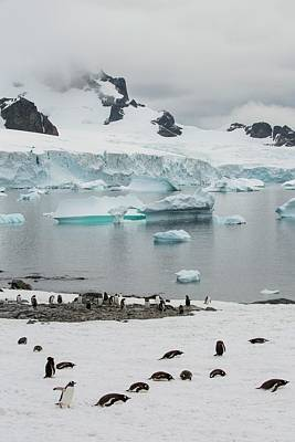 Graham Photograph - Icebergs Off Curverville Island by Ashley Cooper