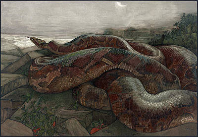 Python Painting - Jungle Book, 1903 by Granger