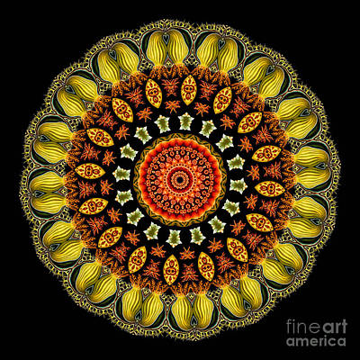 Kaleidoscope Ernst Haeckl Sea Life Series Art Print
