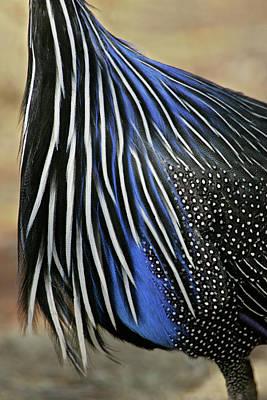 Guineafowl Photograph - Kenya, Samburu National Reserve by Jaynes Gallery