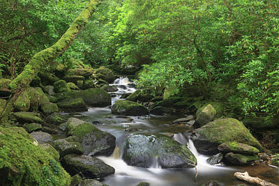Killarney National Park, County Kerry Art Print
