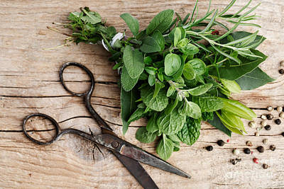 Four Photograph - Kitchen Herbs by Nailia Schwarz