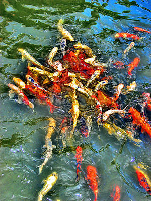 Koi. Loro Parque. Puerto De La Cruz. Tenerife. Canary Islands. Original by Andy Za