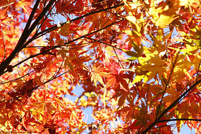 Leaves Art Print by Les Cunliffe