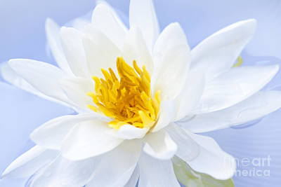 Lilies Royalty-Free and Rights-Managed Images - Lotus flower by Elena Elisseeva