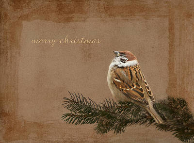 Sparrow Mixed Media - Merry Christmas by Heike Hultsch