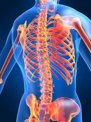 Osteopath Digital Art - Misc. Anatomy Images by Joseph Ventura