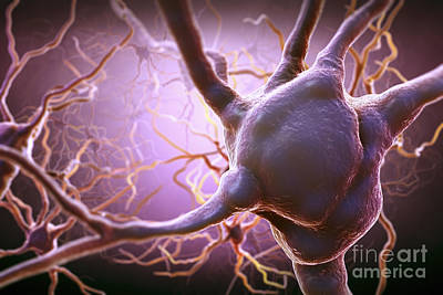 Photograph - Neuron by Science Picture Co