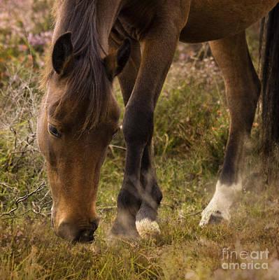 Winter Animals - New Forest Pony by Angel Ciesniarska