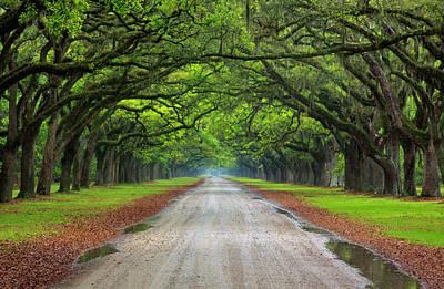 Wormsloe Photograph - North America, Usa, Georgia, Savannah by Joanne Wells