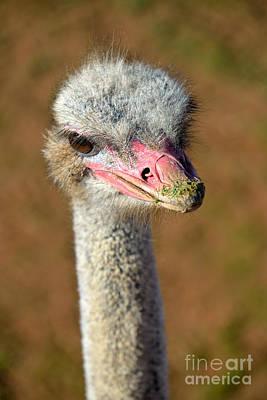 Ostrich Photograph - Ostrich by George Atsametakis