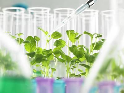 Plant Biotechnology Art Print