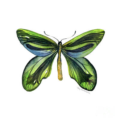 6 Queen Alexandra Butterfly Art Print by Amy Kirkpatrick