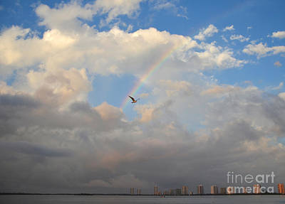Photograph - 6- Rainbow And Seagull by Joseph Keane