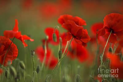 Flora Photograph - Red by Nailia Schwarz