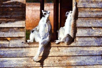 Apes Photograph - Ring Tailed Lemurs by George Atsametakis