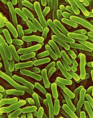 Salmonella Enterica Art Print by Dennis Kunkel Microscopy/science Photo Library