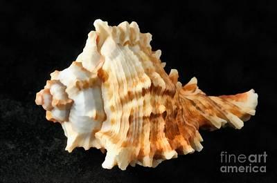 Shell Painting - Sea Shell by George Atsametakis