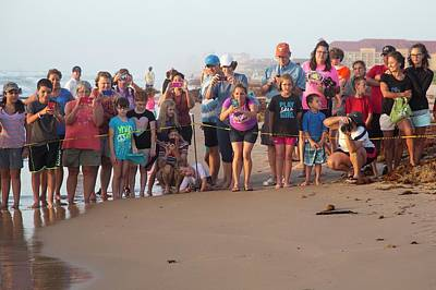 Kemp Photograph - Sea Turtles Conservation by Jim West