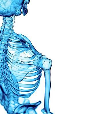 Shoulder Bones Art Print by Sebastian Kaulitzki/science Photo Library