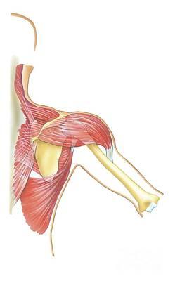 Shoulder Joint Movement, Artwork Art Print