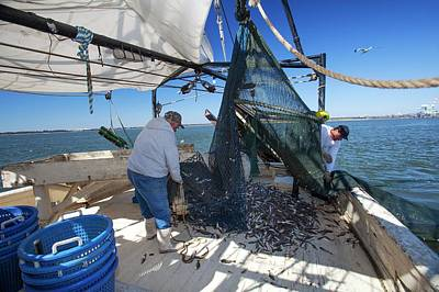 Net Photograph - Shrimp Fishing by Jim West