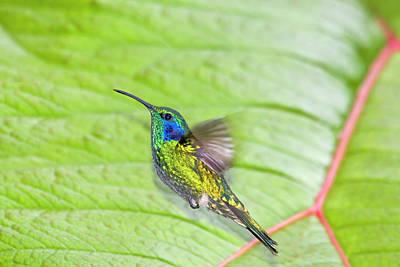 Violet Photograph - South America, Costa Rica, San Gerardo by Jaynes Gallery
