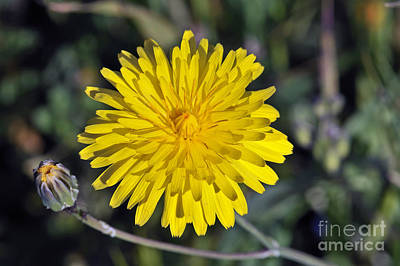 Print featuring the photograph Spring Wild Flower by George Atsametakis