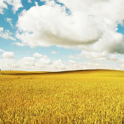 Photograph - Summer Field by Lkpgfoto