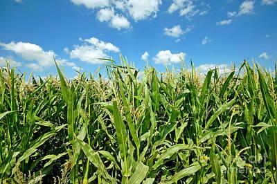 Agricultural Photograph - Summer Landscape by Michal Bednarek