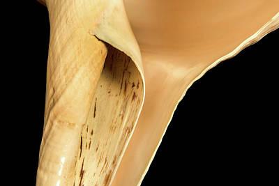 Aperture Photograph - Syrinx Aruanus by Natural History Museum, London