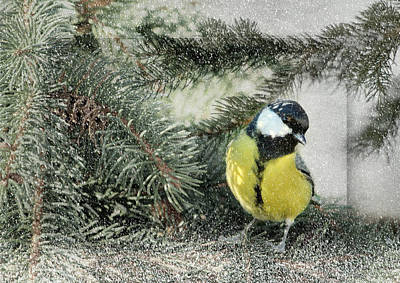 Manipulation Photograph - tit by Heike Hultsch