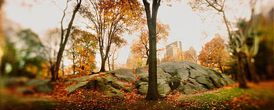 Fallen Leaf Photograph - Trees In A Park, Central Park by Panoramic Images
