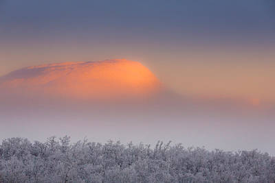 Cold Temperature Photograph - Trees In The Frozen Landscape, Cold by Panoramic Images