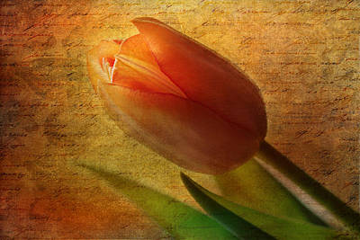Tulip Print by Heike Hultsch